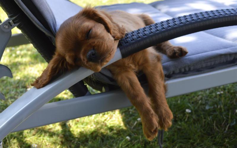 import af hund fra sverige